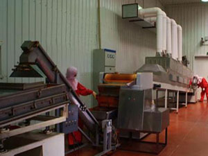 Tunnel Conveyor Belt Microwave Spice Drying Sterilization Machine